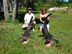 Alligator Hunt, Florida